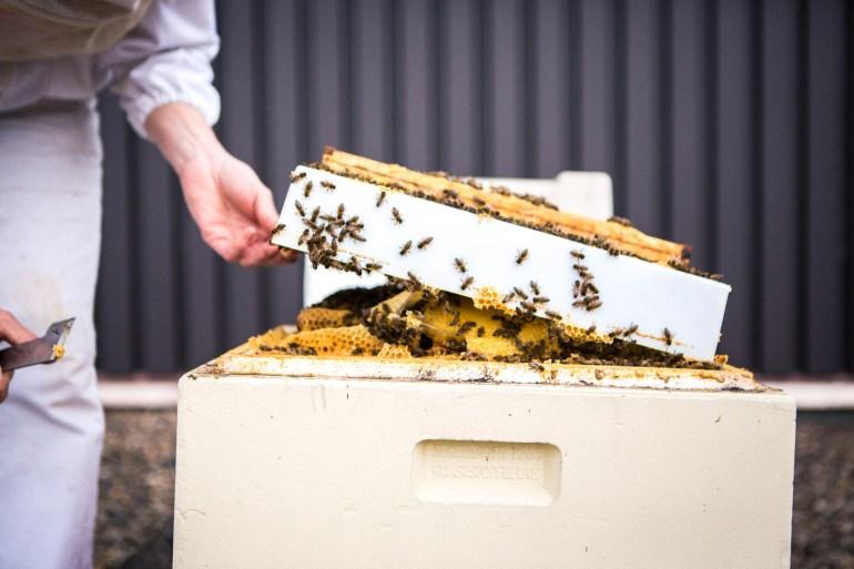 viertel-vor-stadtbienen-erika-mayr-photo-marcus-werner-57