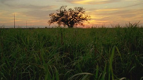 After the detectives caught Reggie Ledoux, the deranged redneck, the camera ominously focuses on a lone tree - a tree that is seen multiple times during the series. With its roots firmly gripping the Louisiana soil, the tree represents the family bloodline that rules the region.