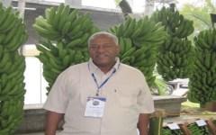 Investigador dominicano presidirá red latinoamericana de musáceas