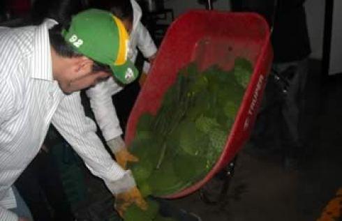 produccion de nopal verdura