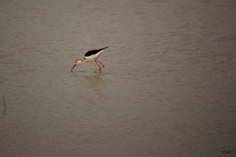Bakarpur Pond - Bird Photography