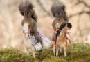 Белки-наездницы на фотографиях Герта Веггена.