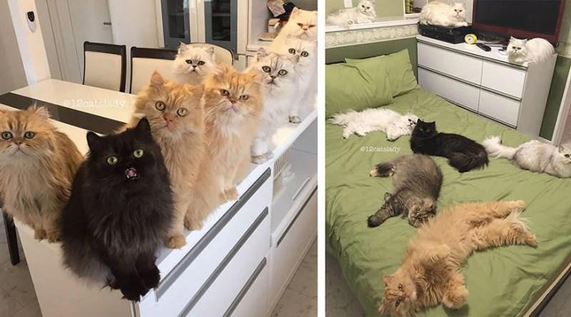 """Instagram-аккаунт с кошками под названием """"12 Cats Lady"""" просто разрывает Интернет."""