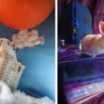 Фотограф снимает спасенных лабораторных животных в сказочной атмосфере, чтобы те хоть под конец своей жизни почувствовать себя счастливыми.