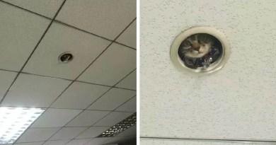 И тут работники офиса поняли, что за ними кто-то следит…