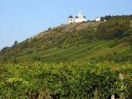 Mayor reconocimiento para los vinos checos.