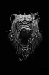 Bulldog_Obery