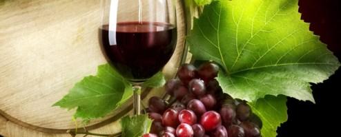 terre-di-cosenza-siaft-wine-vinoit