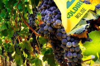 Vino: previsto calo del 10% in produzione 2014