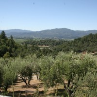 olives in the valley