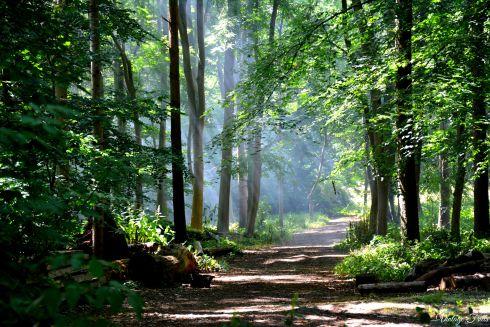Claremont Landscape Garden Woods