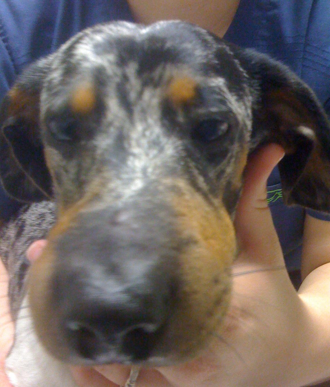Fullsize Of Dog Eye Swollen