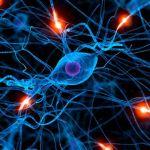10 cosas que el sistema nervioso controla