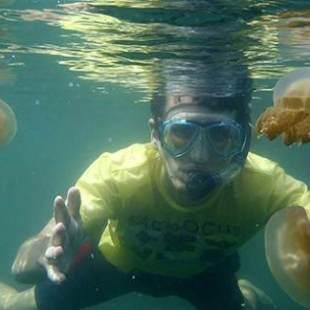 serpientes el salvador medusas
