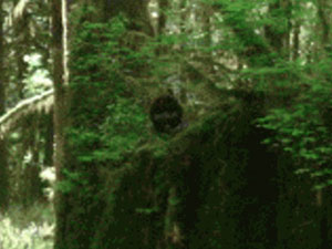 BigfootFaceInWoods