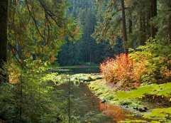 lake_scene