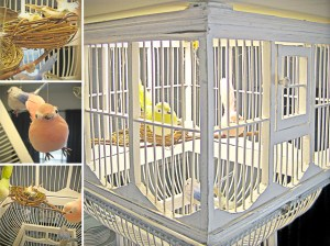 Caged-Birds-Collage