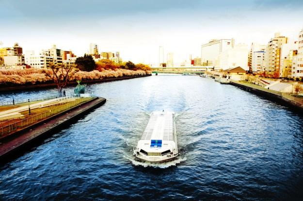 Cheery Blossom Osaka