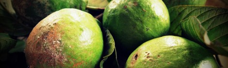 Memories on Trees: Guava