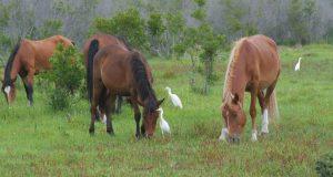 Los caballos fueron valorados en $8,000.