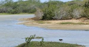 Refugio Nacional de Vida Silvestre de Cabo Rojo. (Voces del Sur)