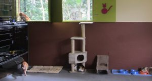 La construcción del espacio es uno de varios esfuerzos que el colectivo realiza para proveer albergue a 300 perros y gatos que tiene a cargo.