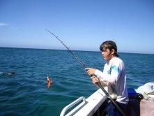 cray fish vissen in australie