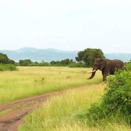 Queen Elisabeth National Park