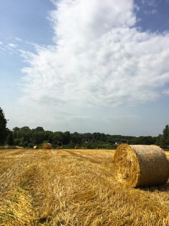 Vlaamse-Ardennen-Wandelwalhalla-23