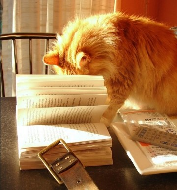 cats-reading-books_sreco_41