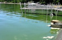 Quebec study focuses on illnesses linked to blue-green algae