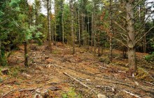 Debate over habitat protection invokes specter of spotted owl