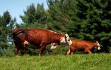 Hopes raised for Farm Bill compromise
