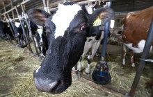 New rules for small farms criticized as costly and overbroad