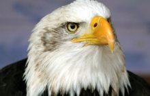 Weyerhauser decries bill protecting habitat for endangered species