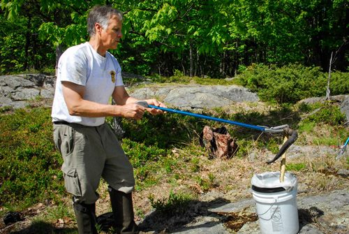 Vermont Fish & Wildlife biologist Doug Blodgett carefully examines a timber rattlesnake in western Rutland County to check it for signs of snake fungal disease, a condition that has struck several species of snakes in Vermont.  Photo by Tom Rogers, Vermont Fish & Wildlife Department.