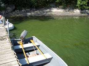 A 2006 blue-green algae bloom off Gould Susslin's dock on St. Albans Bay. Photo courtesy of Gould Susslin