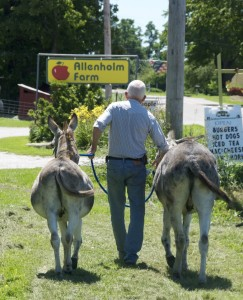 Ray Allen takes a break from lunch to fetch his two donkeys, Willy and Sassafras, who took off down the road on their own. Photo by Dirk Van Susteren