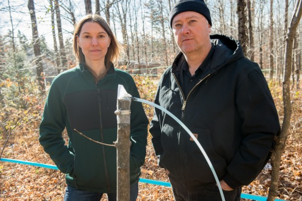 Abby van den Berg and Tim Perkins at Proctor Maple Research Center with new technology they are applying to maple saplings for maple syrup. Photo by Sally McCay/UVM