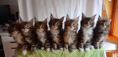 Kittens_born_April_10