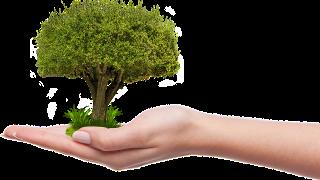 37 Wege dem Planeten Erde zu helfen Wach Auf wachaufmenschheit.de