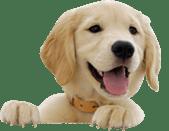 Dog park play, Happy puppy.