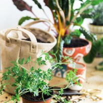 How to grow an indoor herb garden, Waiting On Martha | Photography, Kathryn McCrary