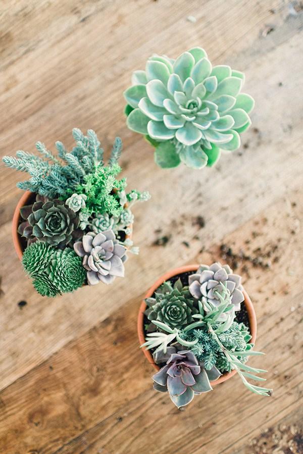 DIY succulents tutorial, Waiting on Martha