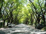 アルゼンチンンの道路は緑がいっぱい!町中に大木