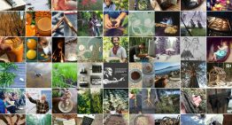 9 Self-Reliant People to Follow on Instagram For Permaculture Awesomeness