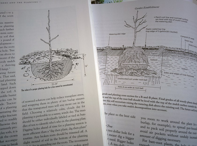 Two ways to plant an apple tree