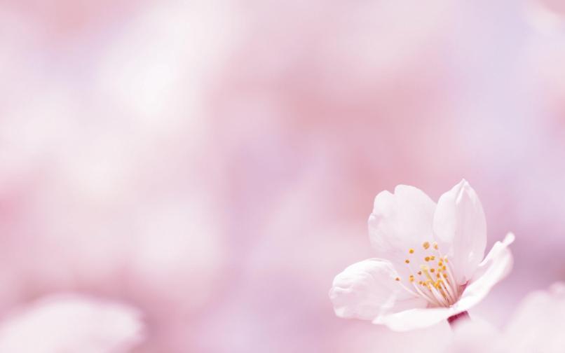 Spring flowers wallpapers for desktop babangrichie spring flowers backgrounds desktop wallpaper cave mightylinksfo