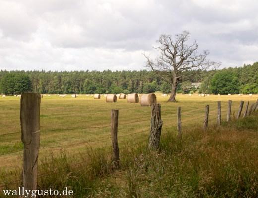 {Unterwegs} Nord-Nord-Ost - 2. Teil Mecklenburg-Vorpommern: Schwerin, Müritzsee & Neustrehlitz