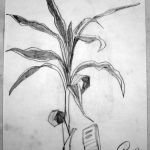 Indoor Plant. 19880522